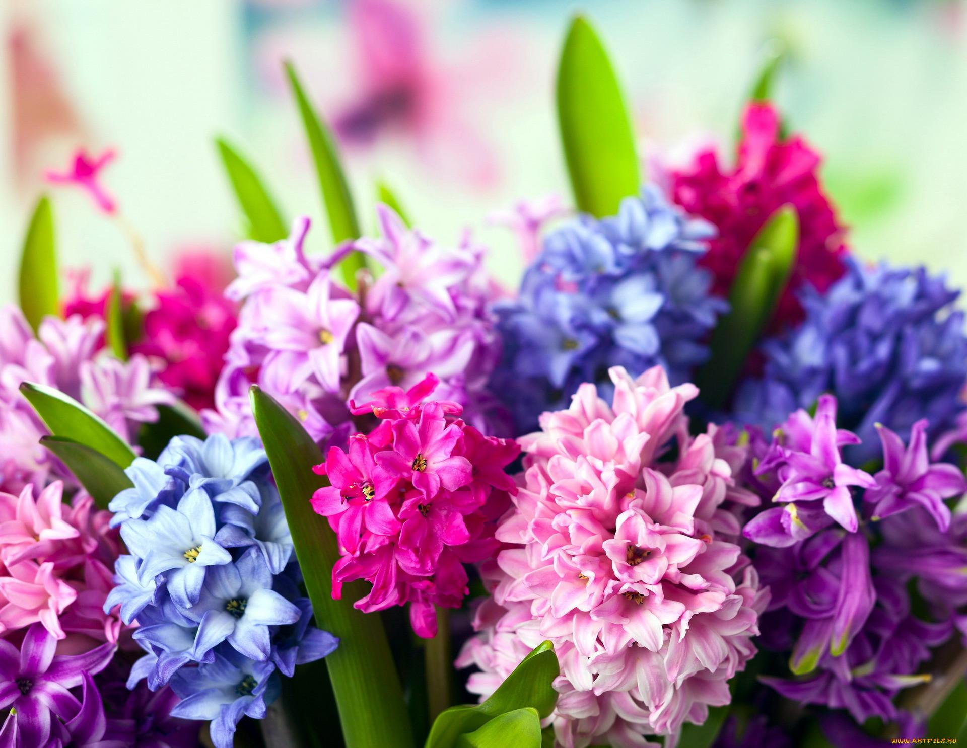 лично курировал яркие весенние букеты цветов фото роман начался